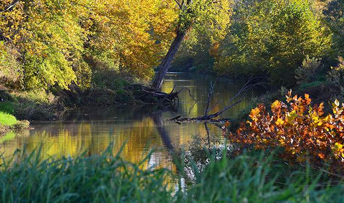 River glade with autumn leaves